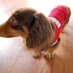 赤シャツで過ごす土曜。