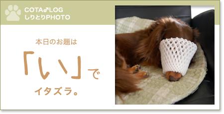 shiritori20090816.jpg