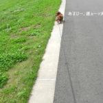 こたろうの散歩。
