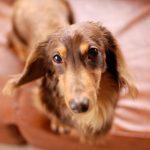 血管肉腫|奇跡の犬。