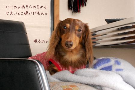 2011111511.jpg