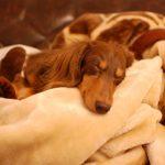 安眠妨害。