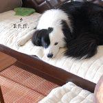 凪の腕枕。