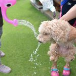 犬と犬と水。