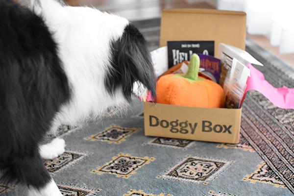 なぎろぐ 凪 Doggy Box