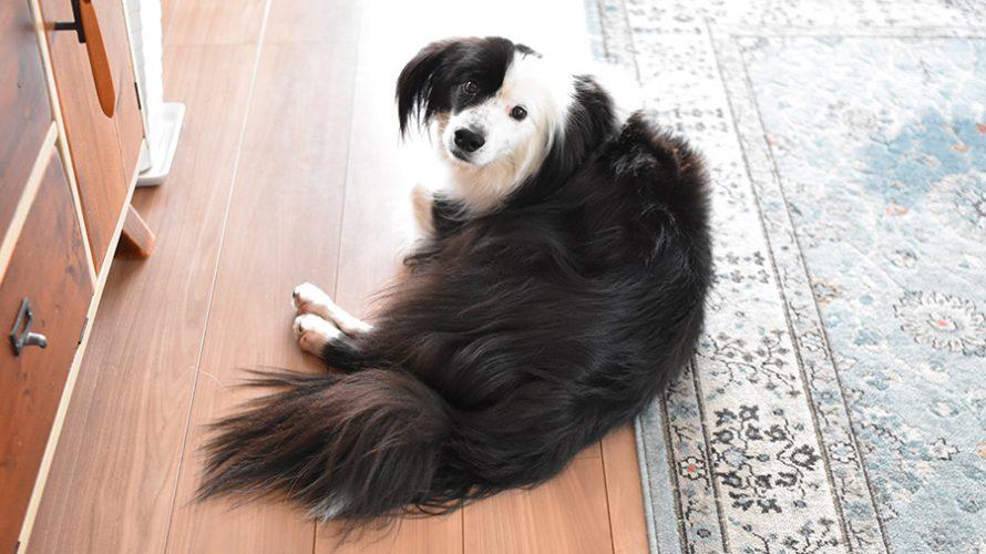 なぎろぐ 片パンダ犬