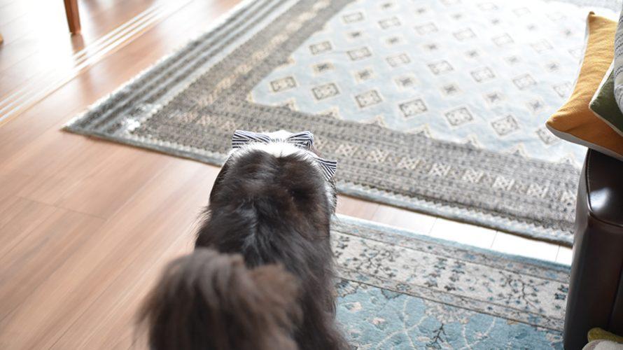 犬 保冷剤マフラー