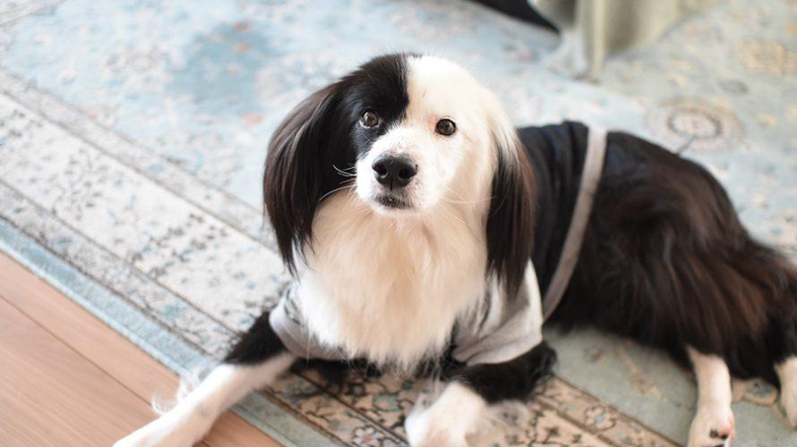 保護犬 犬ブログ