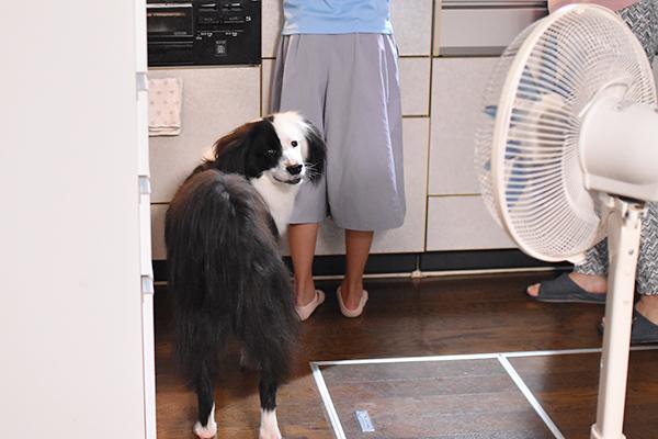 保護犬ブログ 夏休み