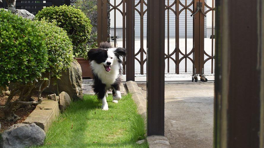 庭駆け回る犬