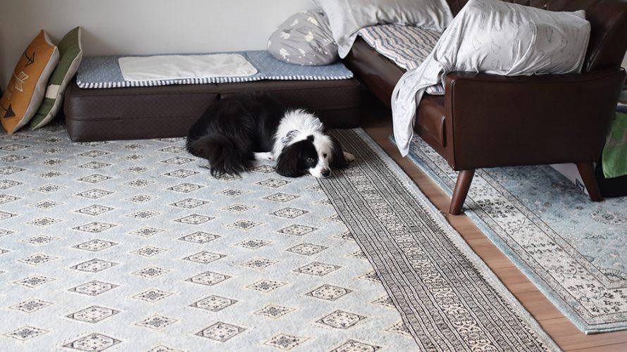 元保護犬 犬ブログ