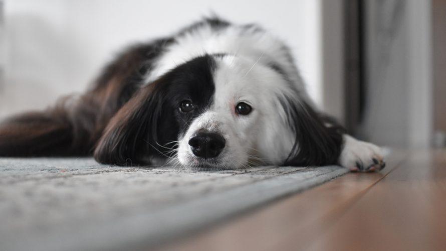 片パンダ お昼寝犬
