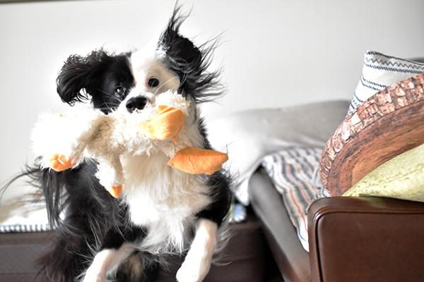 片パンダ犬 スノーマン
