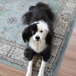 片パンダ 犬ブログ