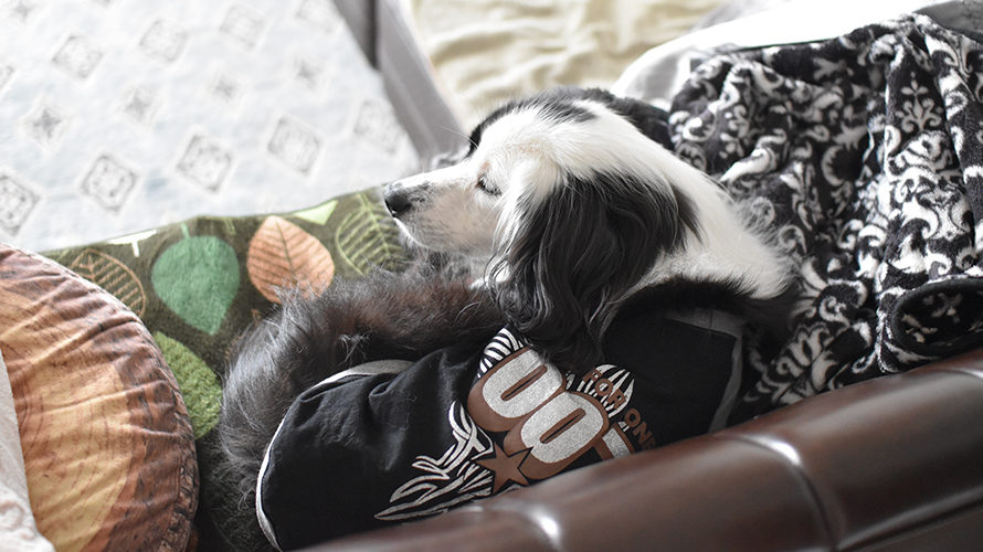 元フィラリア強陽性犬