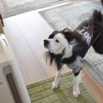 犬 侵入者