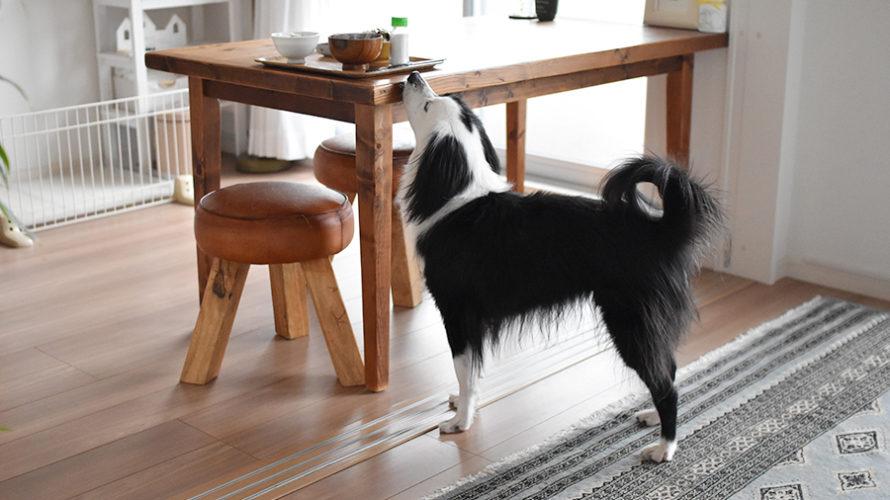 食欲旺盛犬