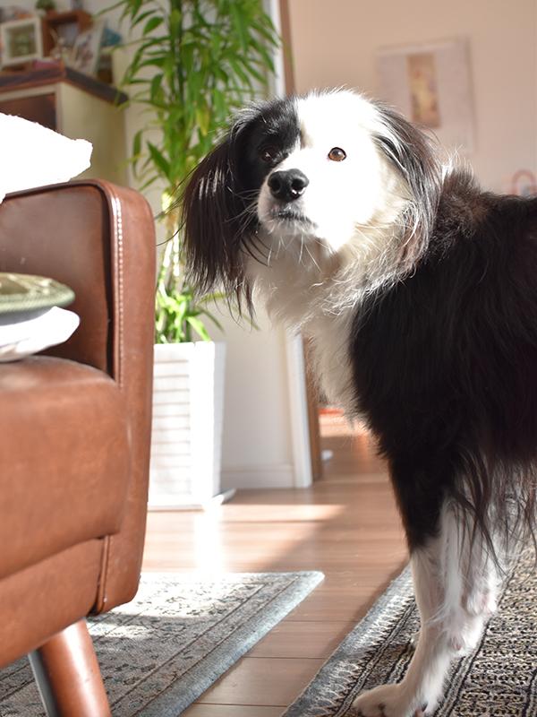 元保護犬ブログ