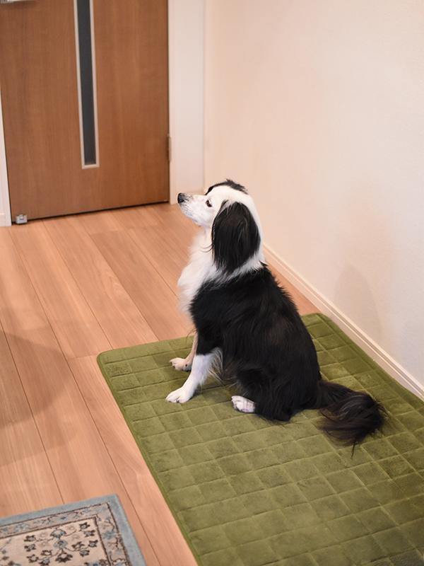 元保護犬 来客