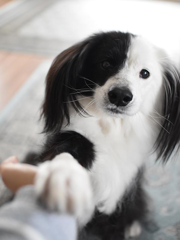 元フィラリア陽性犬