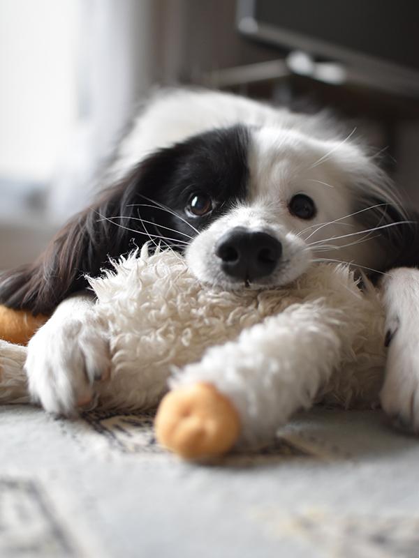 スノーマンと犬