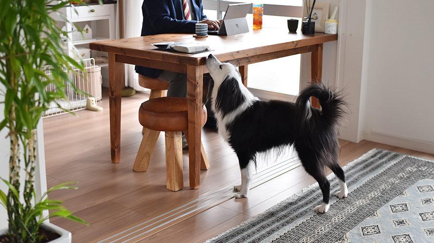 元保護犬 来客対応