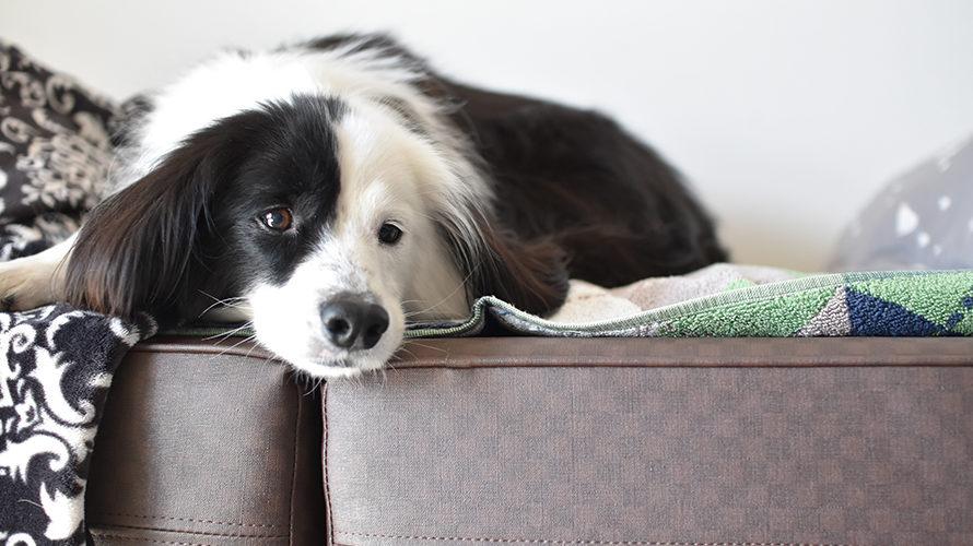 雑種犬ブログ