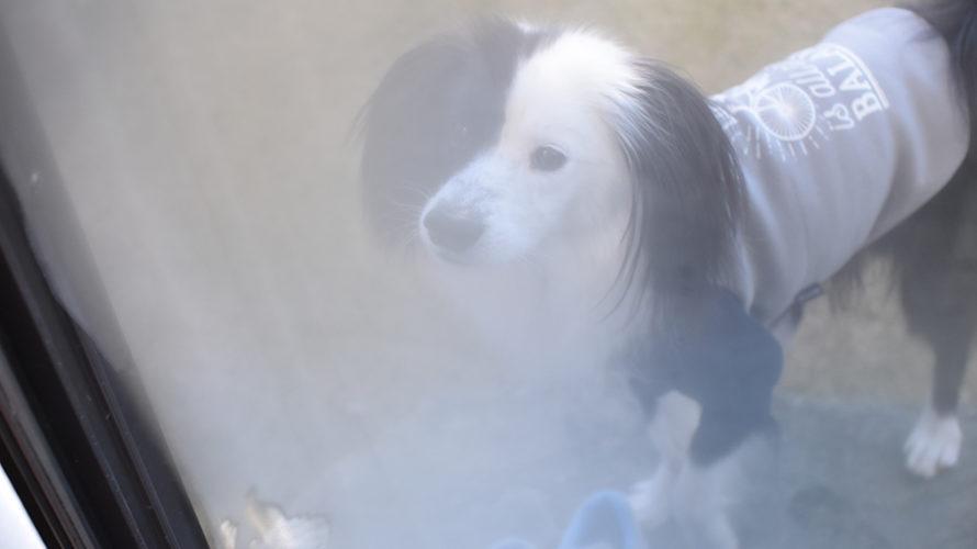 保護犬ブログ 元旦