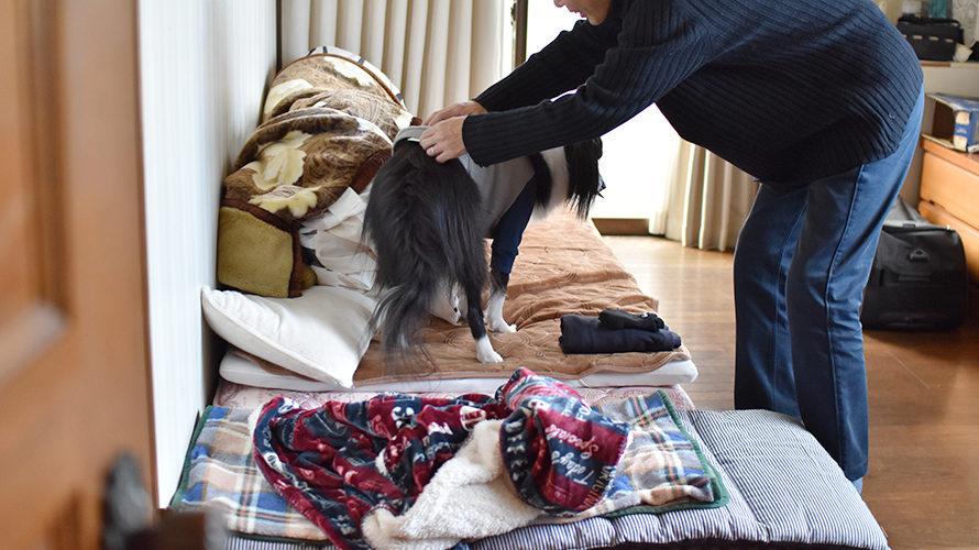 犬とお年玉