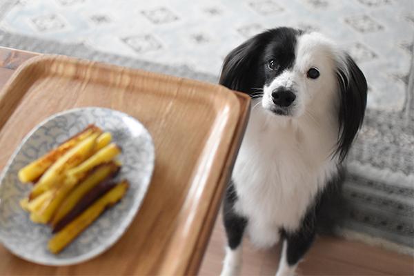 食欲旺盛 雑種犬