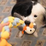 ペンギンと犬