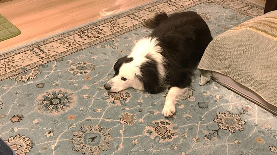 ごはんに反応する犬