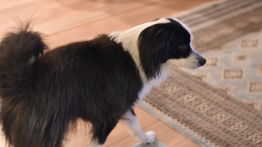 ニコン 犬
