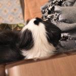 元保護犬の勝手な成長