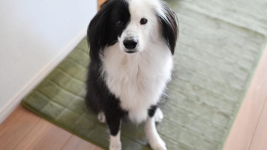 元保護犬 雑種ブログ