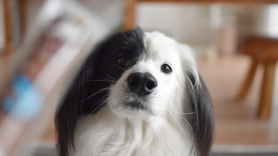 タラソーセージ 犬