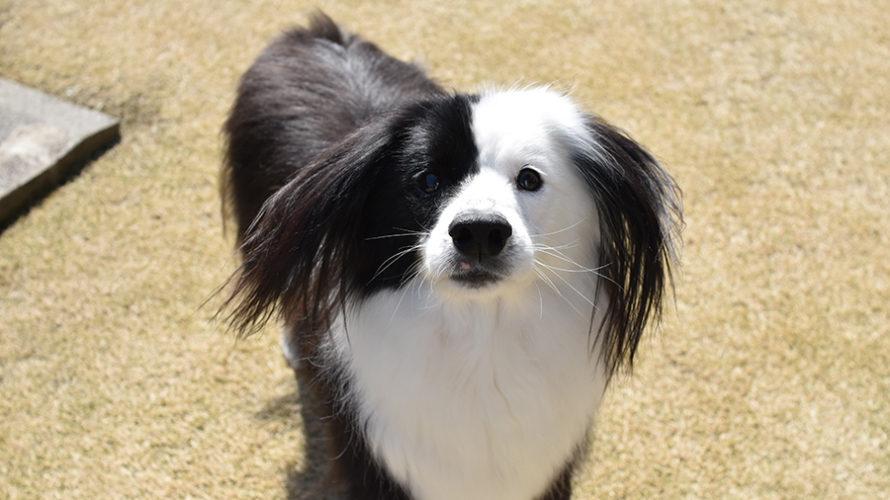 デンタルアニマル 犬