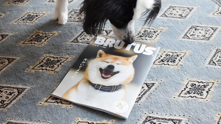 雑誌届く。