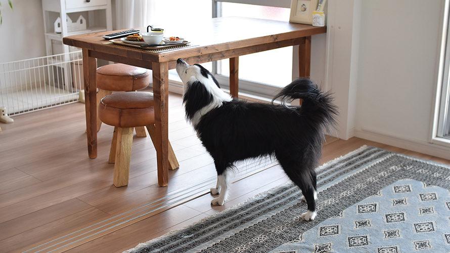 ヒトのごはんと犬の行動