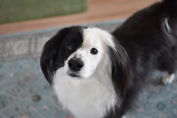 元保護犬雑種の日常ブログ