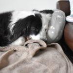 元保護犬雑種ブログ