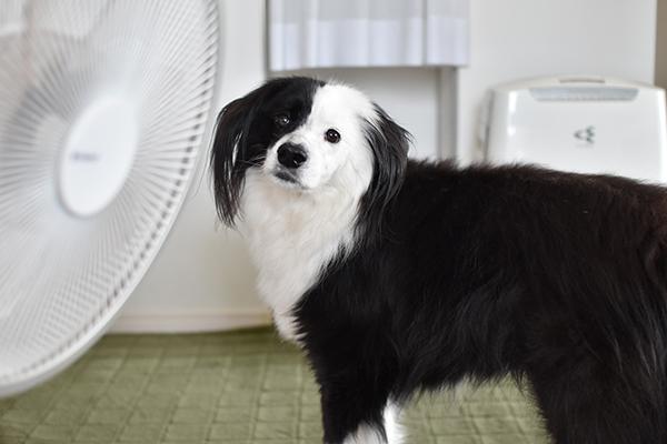 片パンダ犬 雑種ブログ