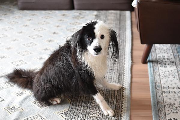 犬を洗う日 凪シャン