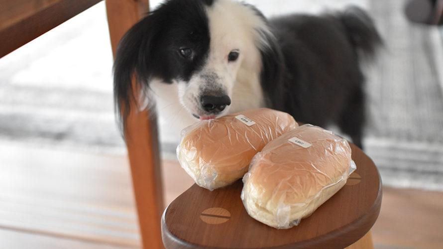 コップパンと犬