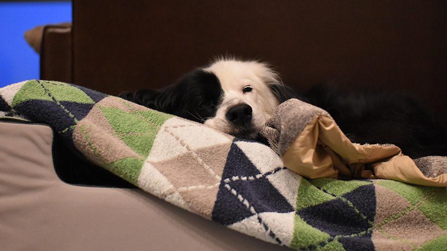雨の休日と犬