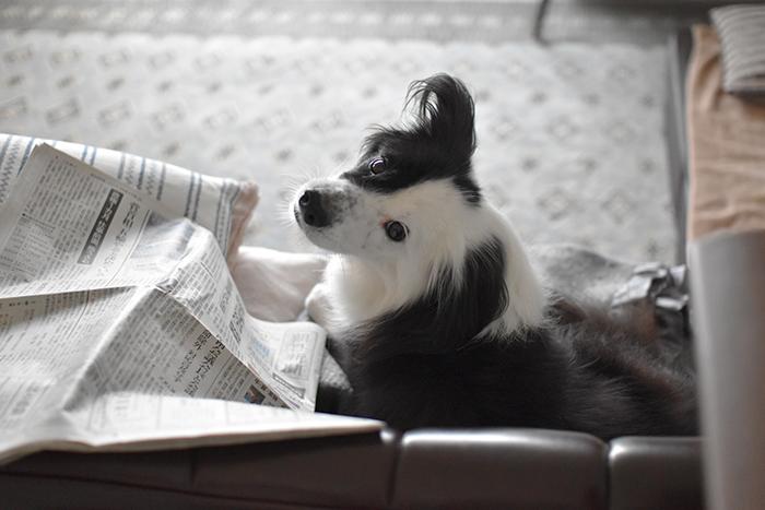ソファの犬