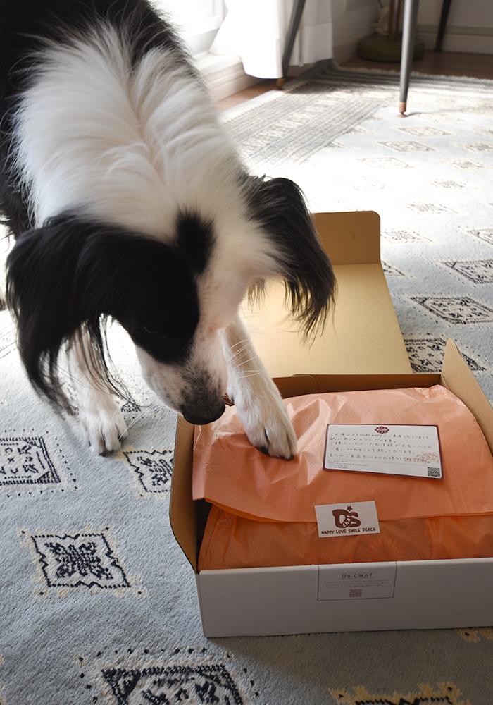 犬に届く荷物