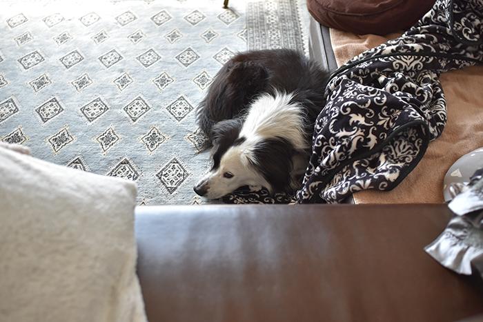 アジソン病 犬ブログ