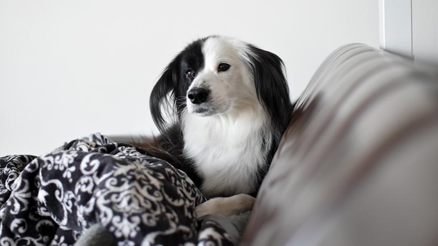 元保護犬の成長ブログ