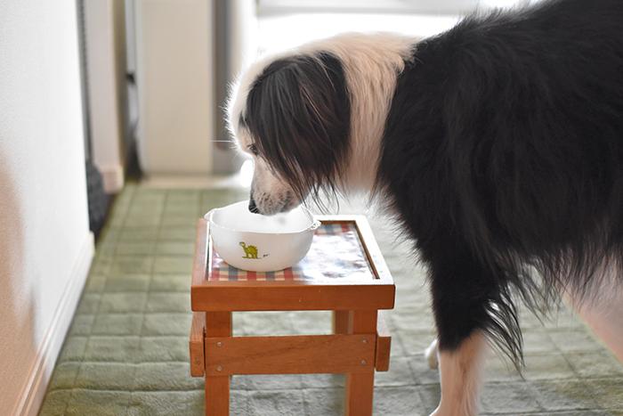 片パンダ犬の増量計画